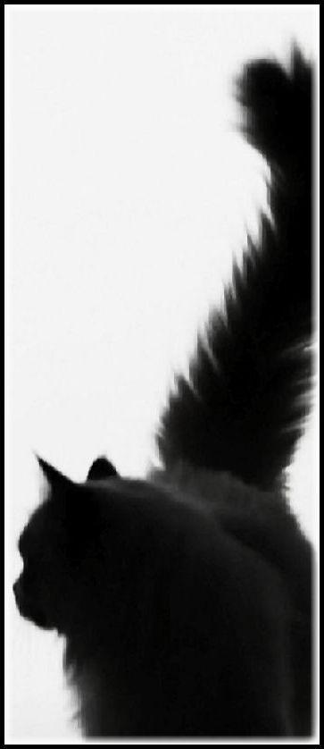 beautiful BLACK CAT SILOUETTE #cats kitty kitten kitties pet pets animal animals nature OMG AWW amazing