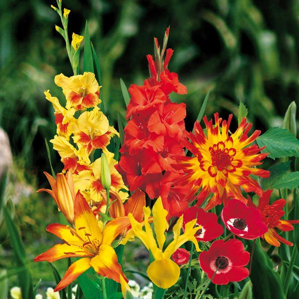 """Dancing Embers"" Bulbs 