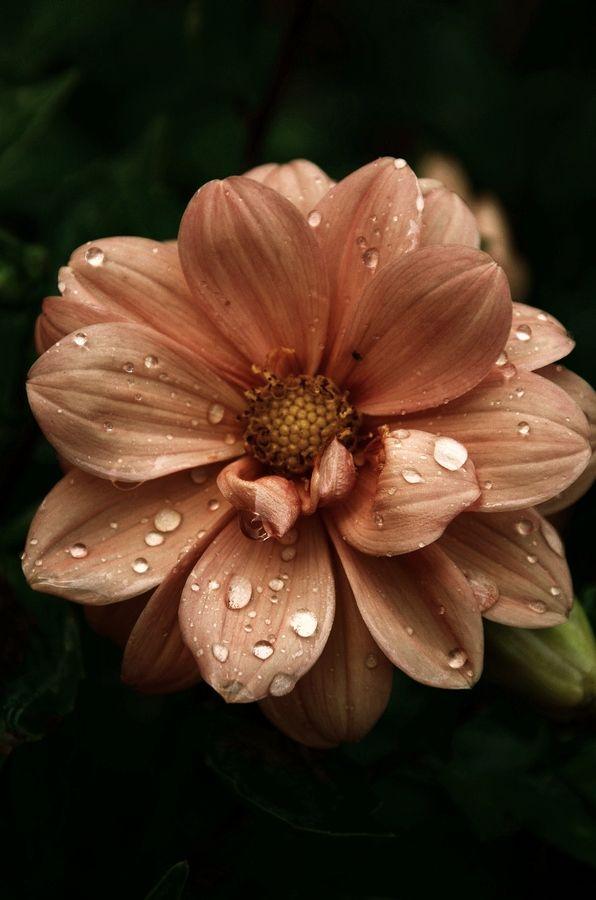 gentle soul by Julia Kaufmann, via 500px