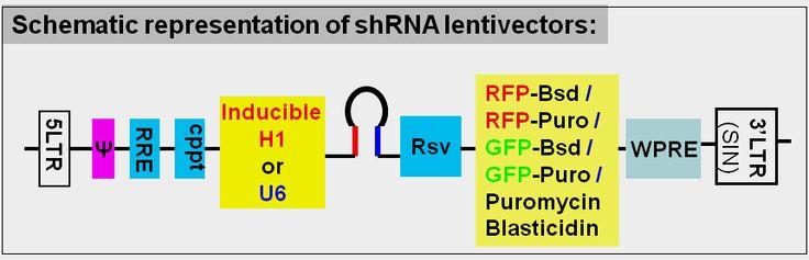Lentivirus Services -> #lentivirus #shRNAlentivirus #shRNA