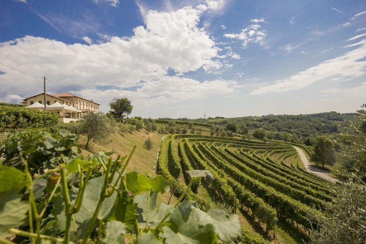 tenuta astoria wines - Yahoo Image Search Results