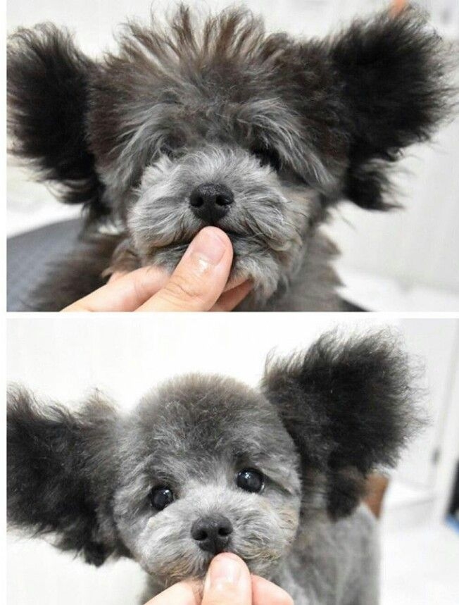 118 best dog and cat grooming images on pinterest dog grooming repinned before after grooming solutioingenieria Image collections