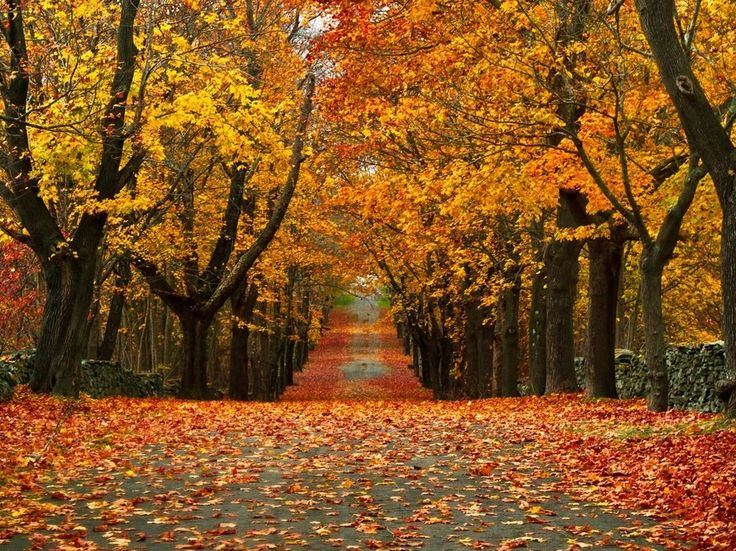 When to go: Late October  Let the unwitting crowds line up for a chance to drive those world-famous routes in Vermont; New England's littlest state is where in-the-know peepers can be found, taking in a fairly impressive annual display. From the classic charm of the Brown University campus to the tree-lined streets of its Providence locale (College Hill is one of the most architecturally satisfying neighborhoods in any East Coast city) and on over to the idyllic eastern reaches of Newport...