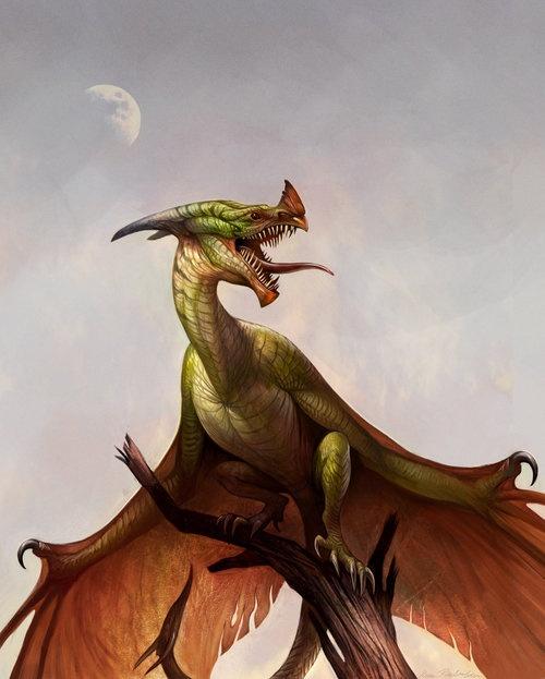 Wyvern Dragon: 68 Best Wyverns Images On Pinterest