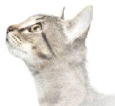 Quantenphysik - Schrödingers Katze