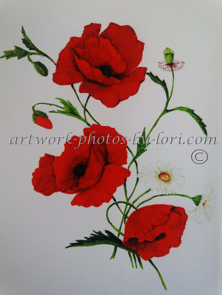 print of an original painting  of poppy's in acrylic