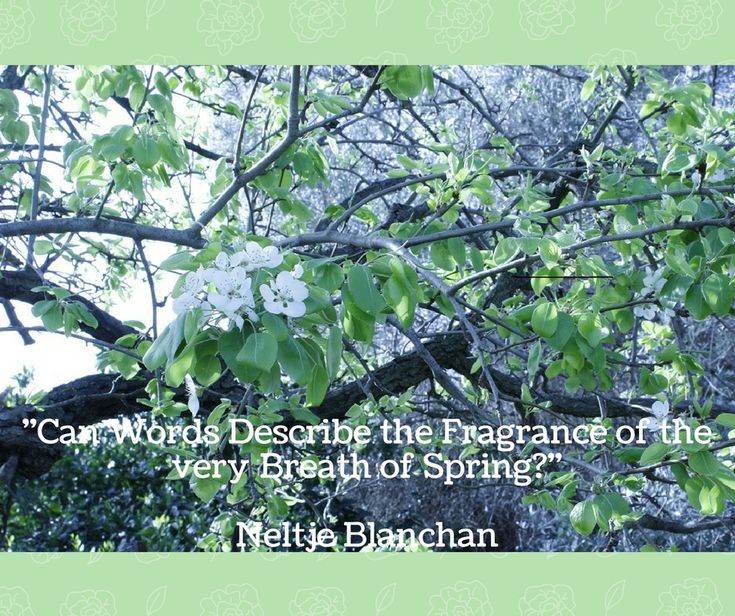 """""""Can Words Describe the Fragrance of the very  breath of Spring?"""" Neltje Blanchan"""