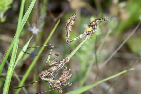 Mantis Photo by NIKOS T. -- National Geographic Your Shot