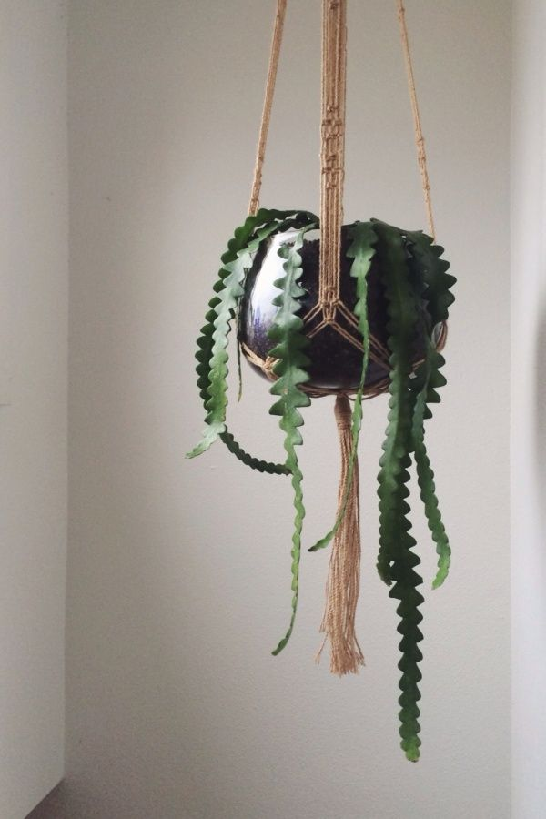 The 25 best indoor hanging plants ideas on pinterest hanging plants hanging plant and window - Cool looking house plants ...