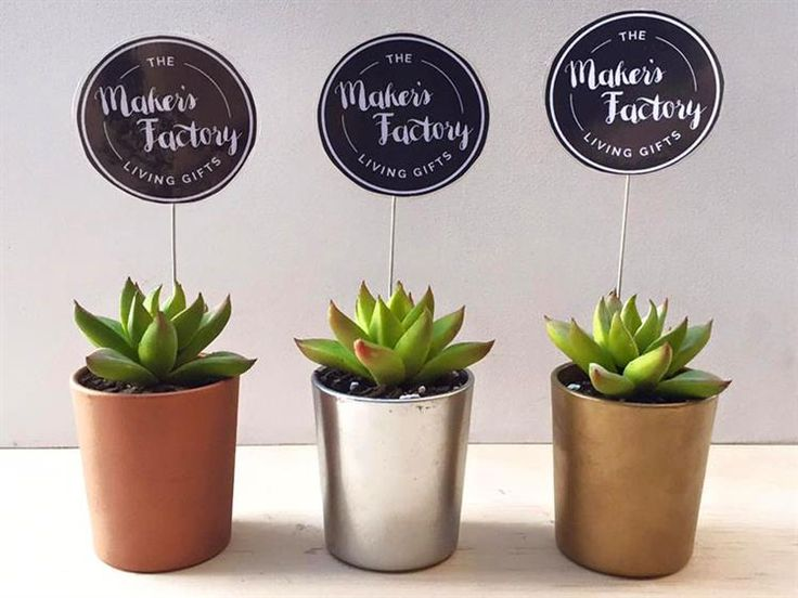 The Makers Factory [SYDNEY] Succulent keepsake pieces and succulent bombonieres & gifts Sydney.