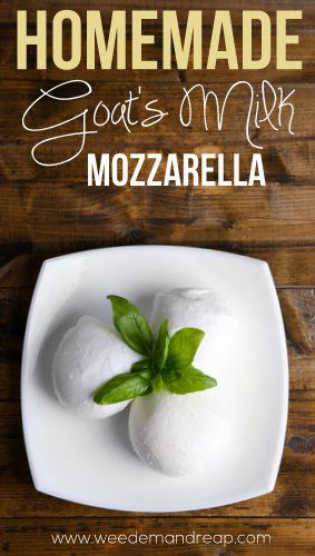 Homemade Goat's Milk Mozzarella