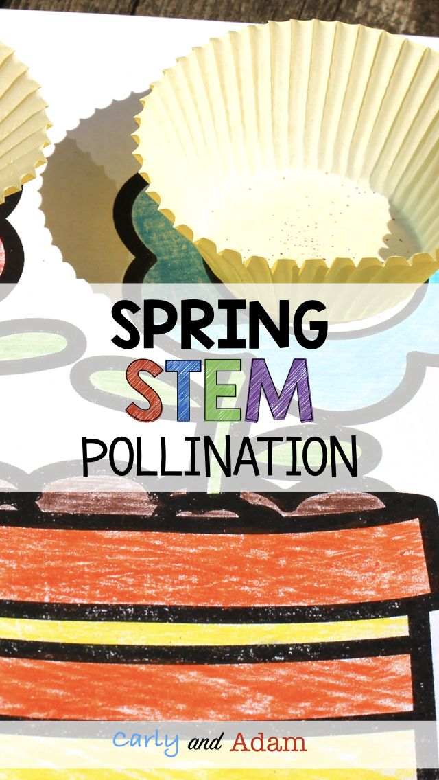 Spring Classroom Activity (Spring STEM Activity): Design a hand pollinator that will transfer pollen from one flower to another!