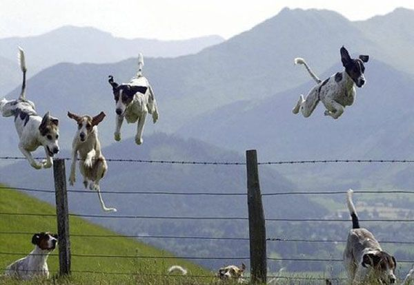 : Doggie, Flying Dogs, Animals, Stuff, Pets, Funny, Things, Photo, Friend