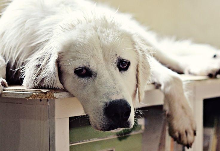 Toy Dog Breeds List -Toy Dog Breeds List  http://dogbreedersguide.com/1172/toy-dog-breeds-list