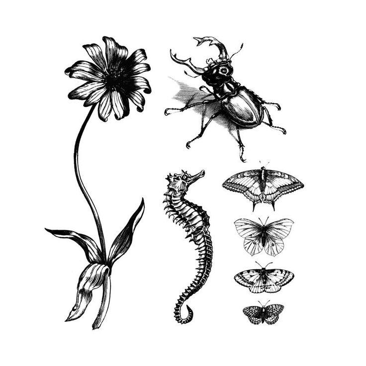 Natural Curiosities Set #Art #Artist #Beetle
