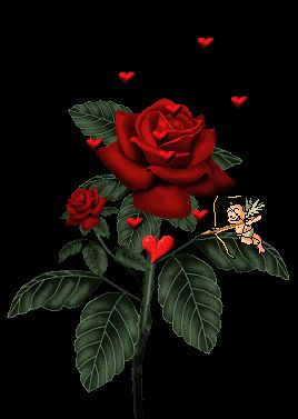 imágenes de rosas con movimiento gif