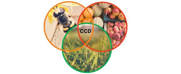Reakcje krzyżowe w alergologii (cz. 2: Przeciwciała przeciwko CCD) - Alergiczne.info