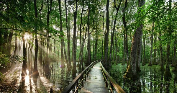 Groundhog Day tends to hog the spotlight, but Feb. 2 is also World Wetlands Day. To mark the occasion, here's a photo tribute to the planet's marshes, swamps an