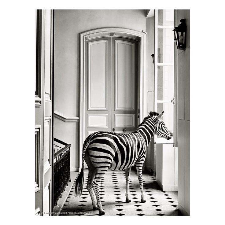 Dyerolle Zebra Composition #2 #1stdibs interior #design