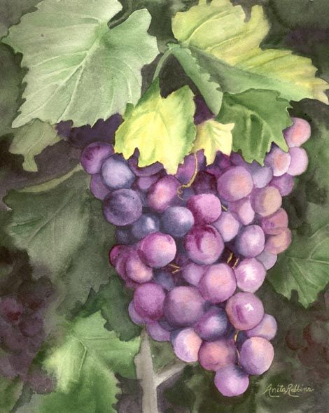 grap painting | Wine Grape Watercolor Painting Art Print ...