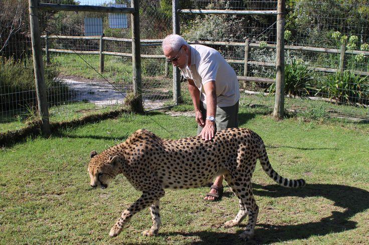 Tamme Geparder er det mange av på Tenikwa.