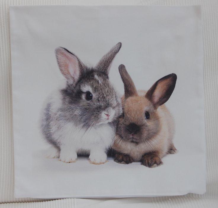 zwierzęta/ króliki