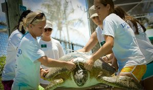 Loggerhead Marine Life Center  VOLUNTEERS ARE THE HEART OF LOGGERHEAD MARINELIFE CENTER!   MAKE A DIFFERENCE AND JOIN THE VOLUNTEER TEAM!  Volunteer Benefits: Take an active role in ocean conservation. Make new friends with similar interests. Earn community service hours for educational requirements. (We no longer accept court mandated community service applicants) Gain real life work experience. Continue your education through ongoing training lectures and classes.