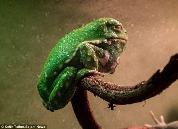 【速報】 ジャバ・ザ・ハットみたいなカエル 見つかる : ゴールデンタイムズ