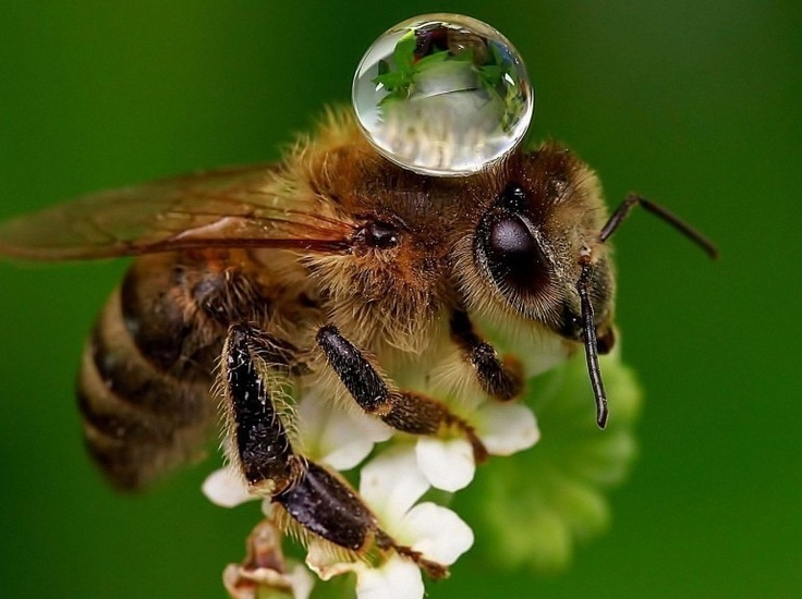 : Spiders With Water Droplets, Bees Honeyb, Waterdrop, Dew Drop, Water For Bees, Beekeeping Buzz, Dewdrop, Honey Bees, Water Drop