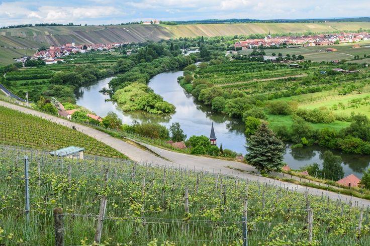 Am Main entlang durchs Fränkische Weinland