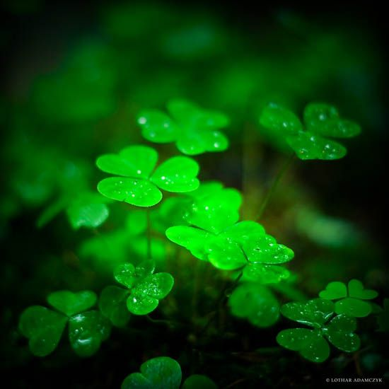 I think I want clover or shamrocks for my bouquet... I love them... So much..