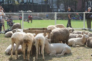 32 Things You'll Find At A Sheep And Wool Festival. Went to the NY Sheep & Wool Festival this past weekend and had a great time! Already looking forward to next year!