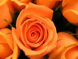 black rose - Szukaj w Google