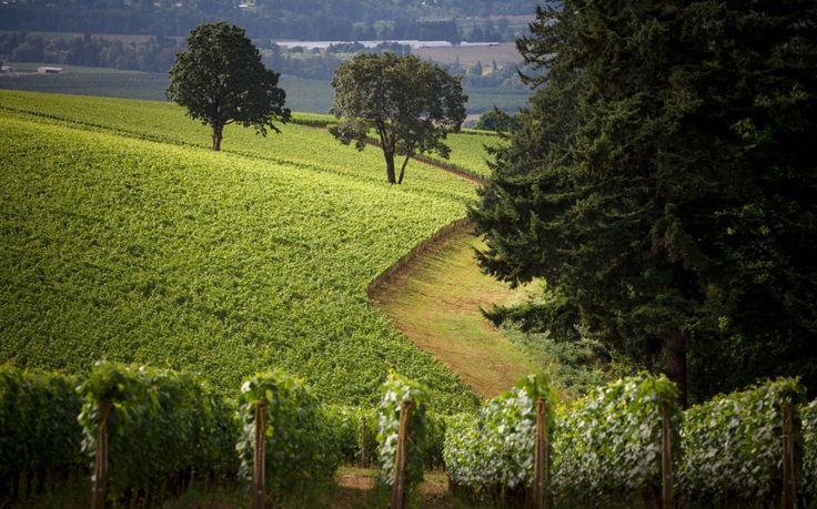 Pinot Path: Route 99-W, Willamette Valley, Oregon - 12 Wine Destinations to Add to Your Bucket List   Travel + Leisure