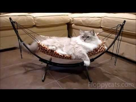 how to put together the trixie cat bed hammock                               floppycats 113 best cat beds images on pinterest   cat beds kittens and      rh   pinterest