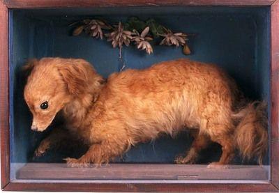 10 Extinct Dog Breeds | Dog breeds | Pinterest