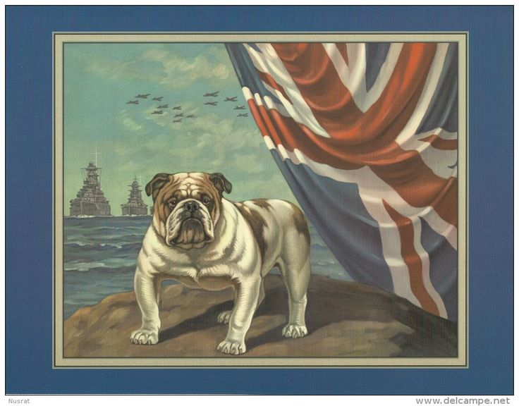 Reprint / Reproduction photo d´époque, Bulldog, WW2, drapeau anglais, très belle qualité - Delcampe.net