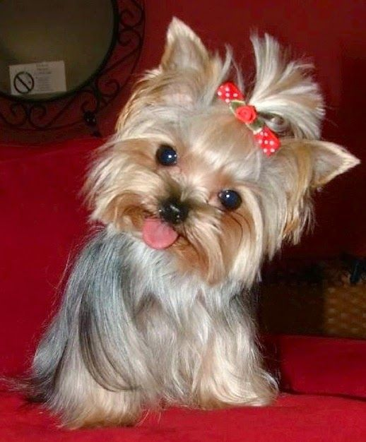 10 Most Loyal Dog Breeds of All times                                                                                                                                                                                 Plus