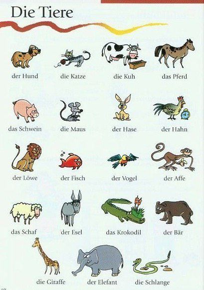 learning German. Die Tiere. #animals #german