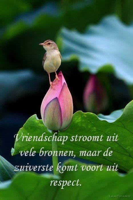 Vriendschap...
