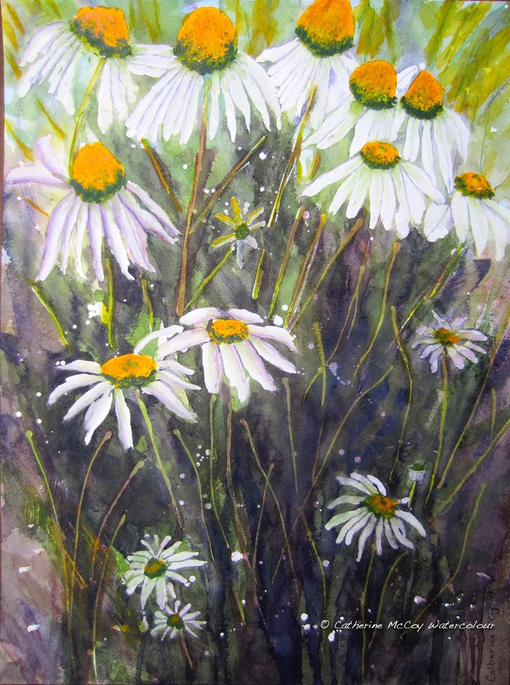 """Dancing Daisies. Watercolour 12"""" x 16"""" by Catherine McCoy"""