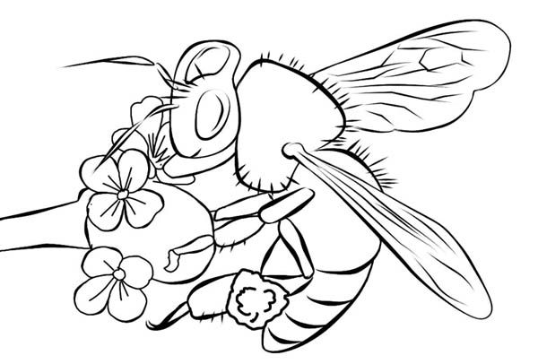 Bumblebee Realistic Bumblebee Image Over The Flower Coloring Page Online Coloring Pages Flower Coloring Pages Coloring Pages