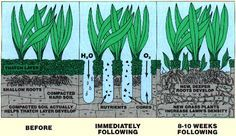 Core Aeration provides the grass with H20 and O2 which helps develop new deeper roots and grass density.