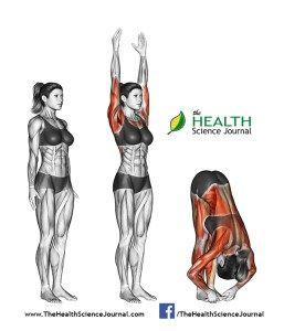 © Sasham | Dreamstime.com - Yoga exercise. Hands to Feet Pada. Hastasana. Female