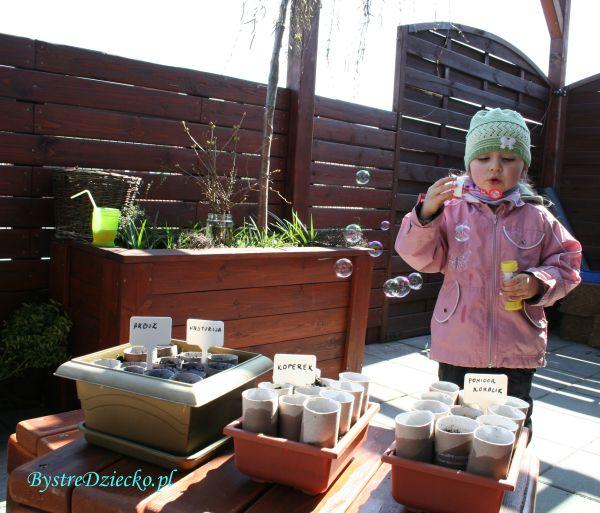 Sadzonki kwiatów balkonowych w rolkach po papierze toaletowym - Zdrowa dieta dla…