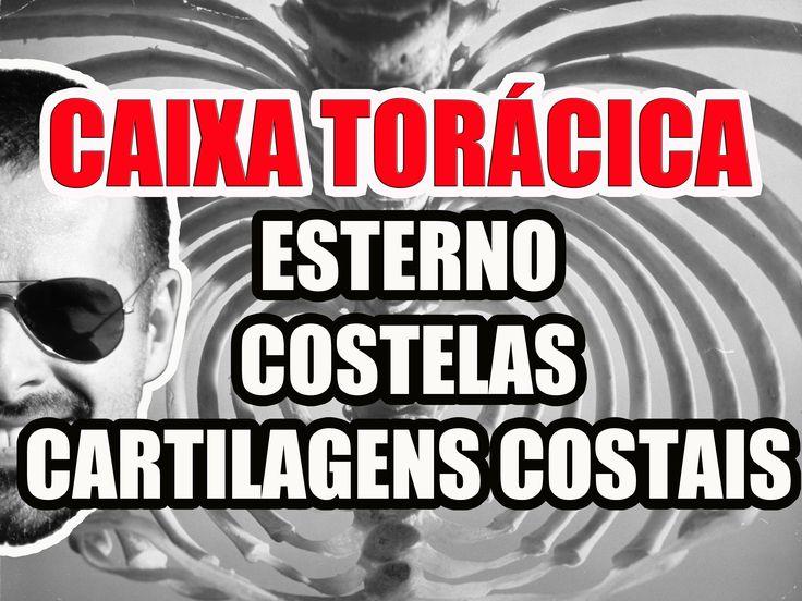 Vídeo Aula 106 - Anatomia Humana - Caixa Torácica: Esterno, Costelas e C...