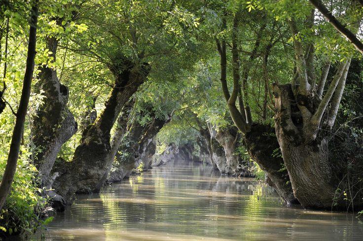 Marais Poitevin ©Pascal Baudry pour Sud Vendée Tourisme