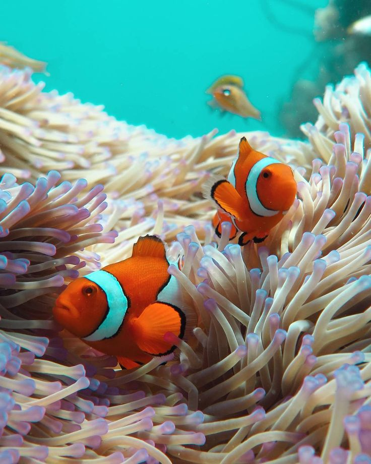 Nemo and Marlin getting ready for a full day of being a fish on the @greatbarrierreefqld! by islandjems http://ift.tt/1UokkV2