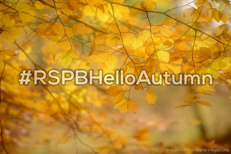 #RSPBHelloAutumn - check out our #RSPBHelloAutumn board to find out how you could win a gorgeous canvas print worth up to £200! 2017, Contest, Fun, Photography, Home Inspiration, Giveaway, Competition, Prizes, Autumn, Decor, Landscape photography, inspiration, RSPB