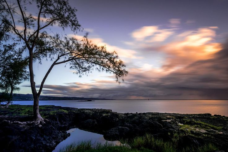 still here.  A pine tree stands on the shore on an early morning long exposure shoot